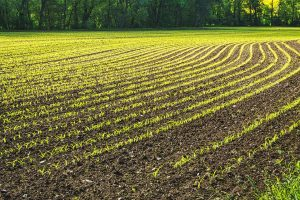 Αγροτική έκταση