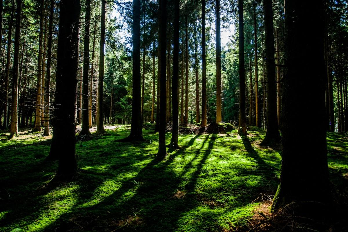 εικόνα δάσους